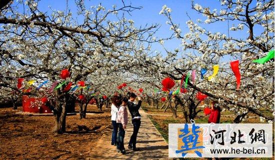 魏县梨花节景点_今年,魏县举办第17届梨花节,设置了16个旅游景区,分梨花观赏,水城观光