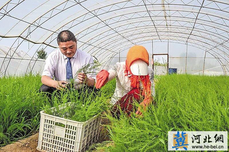 秦皇岛开发区:打造生命健康产业先行区