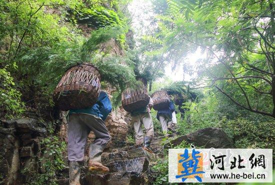 保定唐县全胜峡景区开始雨季造林