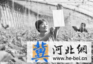 行唐县农林畜牧局引导农民发展现代设施农业