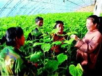 平泉市开展冬季科技培训促进农民致富增收