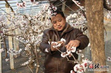 顺平县:大力发展农业特色产业