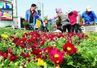 35万盆鲜花将扮靓承德市区街头