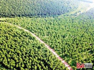 """碳汇交易""""点绿成金"""" ――丰宁千松坝林场建设碳汇林助农增收探"""