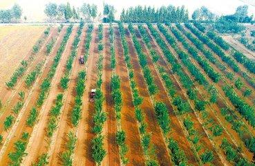 秋播秋种正当时 农民施肥播种忙