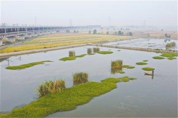 唐山丰南: 生态混养 蟹肥稻香