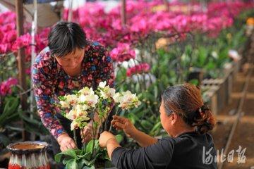 河北滦南:鲜花迎春
