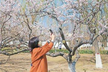 春日游园 乐享自然
