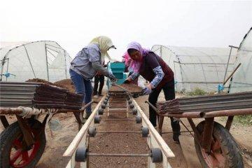 唐山丰南:春日水稻育秧忙