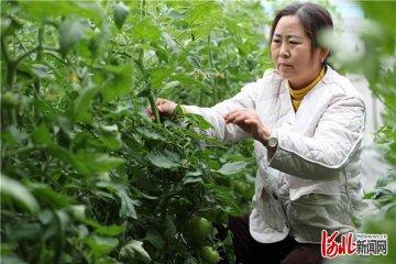 河北文安:特色家庭农场助力乡村振兴