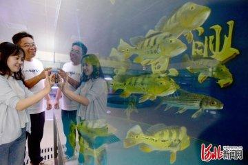 河北邯郸:观赏鱼产业富农家