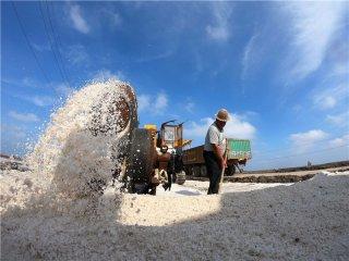 河北唐山:海盐收获忙