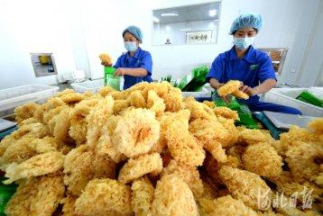河北沧州:农产品产业链 助推农业提档升级